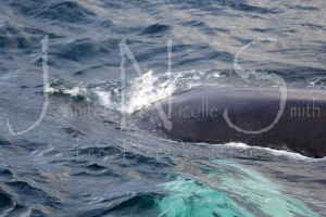 Yes, that is a whale. So very close. Eeeee (!!!)